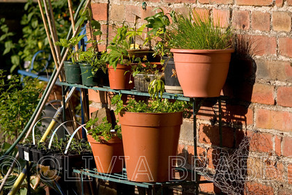 herb pots 